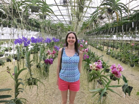 Surrounded by Vanda orchids