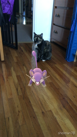 Zoe is not amused by this Rattata interloper.